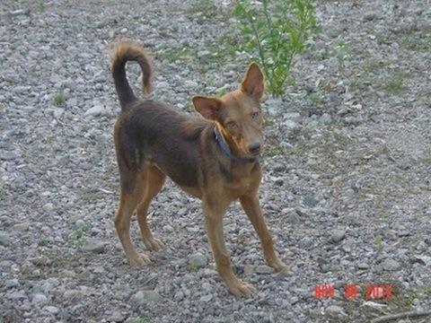 JBAR Pets for Adoption