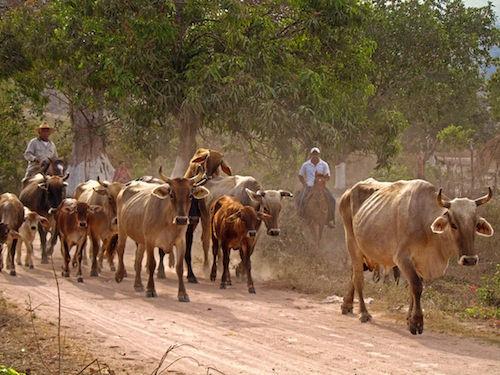 KBR Mexican Cowboys