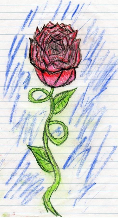 Lexi's rose