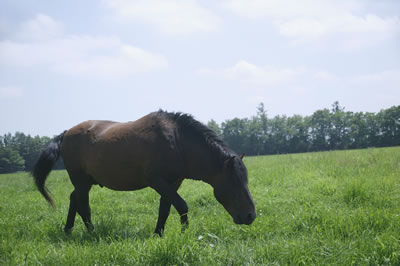 brown-horse-grazing.jpg