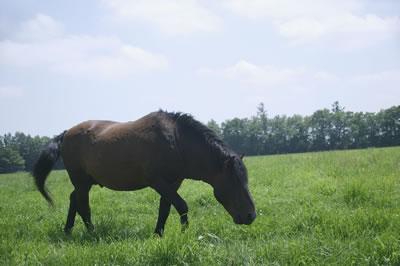 brown-horse-grazing.jpg