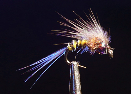 Fly of the Month - Bat Wing Baetis Emerger