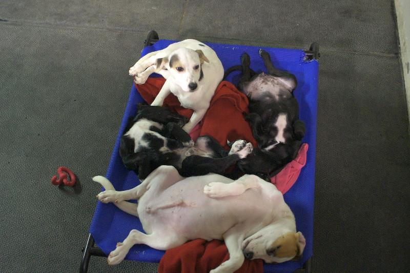 Animal Rescue Aid News