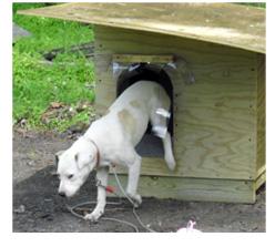 Peta Doghouse