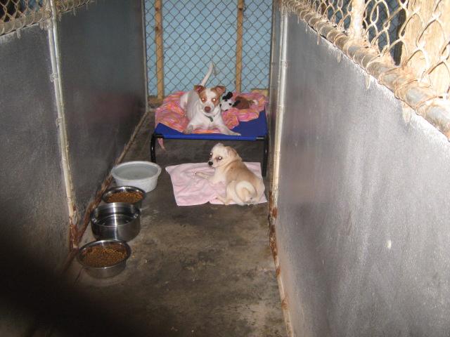 Tucker County Animal Shelter