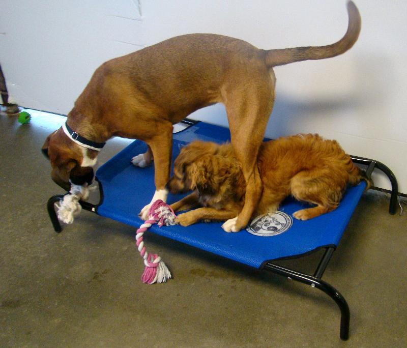 Atlanta Pet Rescue (GA)