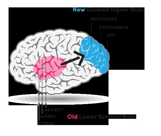 New HBL Brain