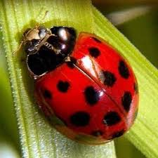 LadyBugWeLoveBugs