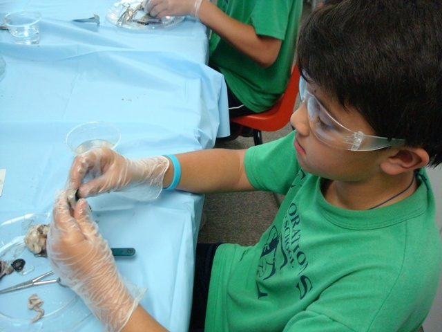 student examines a bovine cornea provided to his class by IIVS
