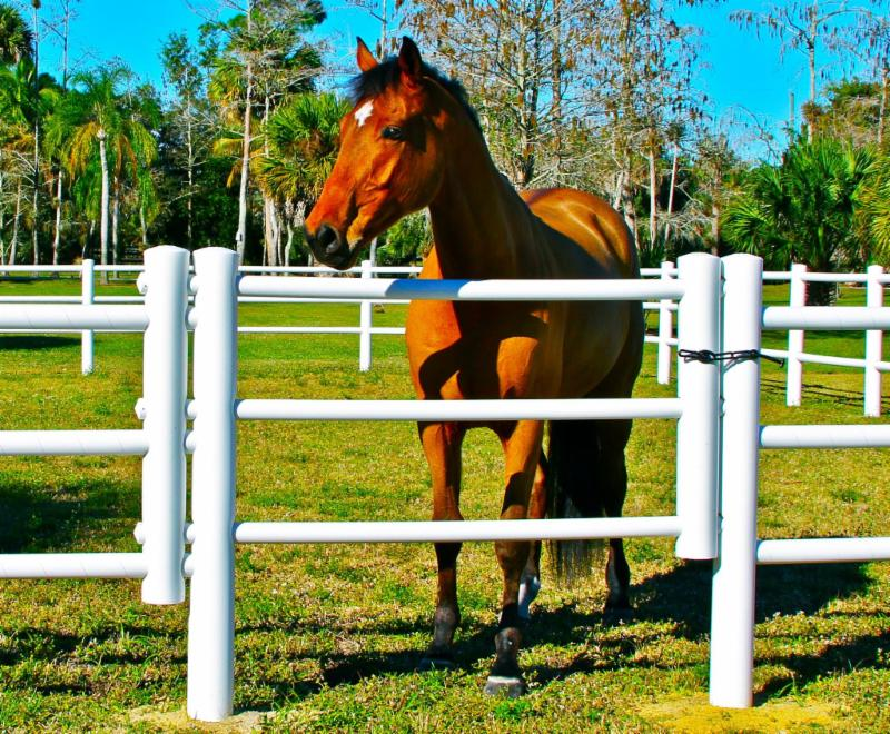 Treat Your Horse Like Royalty - and Keep Him Contained - with EquiSafe U.S. Fencing