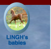 WC5_LinghBabies_button