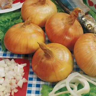 Walla Walla Sweet Onions
