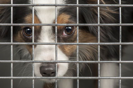 Dog in cage shelter
