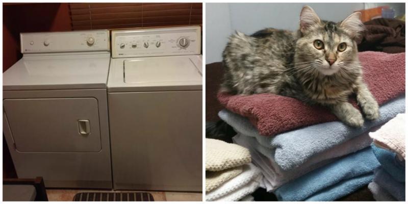Water Dryer Cat