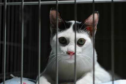 Fotolia cat in cage
