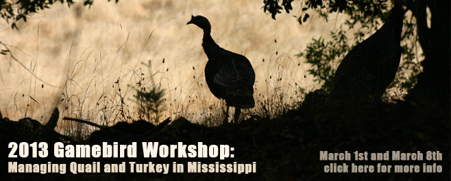 Gamebird workshop