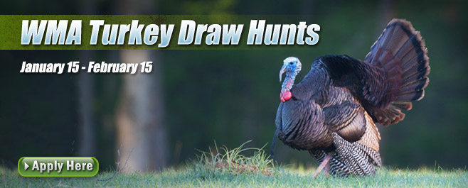 wma turkey draw hunt