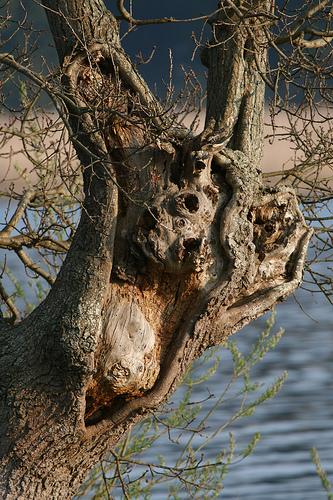 Tree Transmogrify