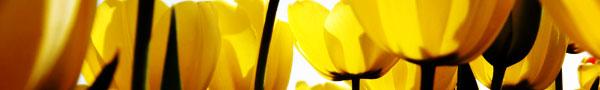 seasonal_flowers2.jpg