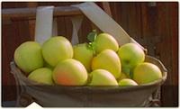 golden_delicious_apples