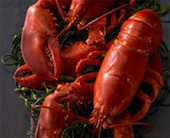 legal_seafood_lobster