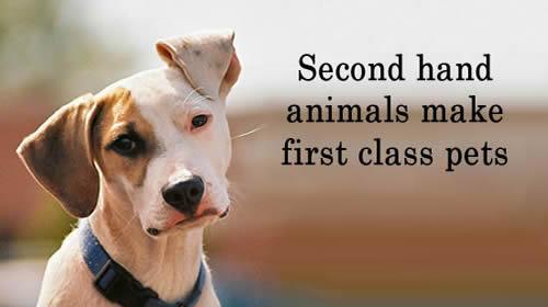 SCHS Dog