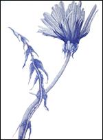 """Joan Linder's """"Dandelion"""""""