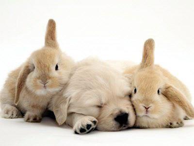 dog+bunny