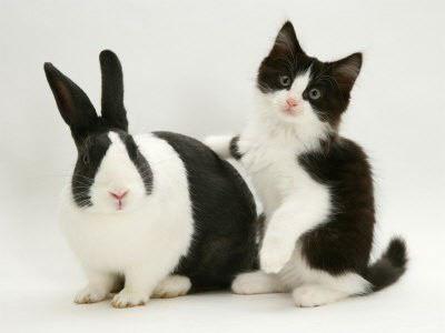 cat+bunny