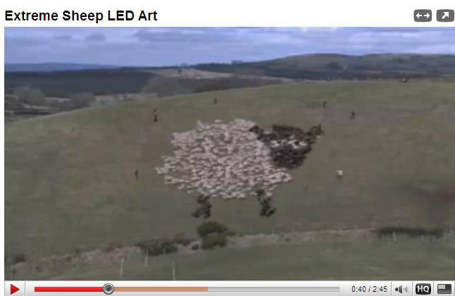 Extreme Sheepherding