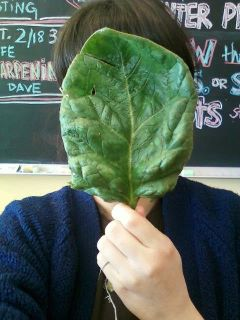 spinach as a face mask