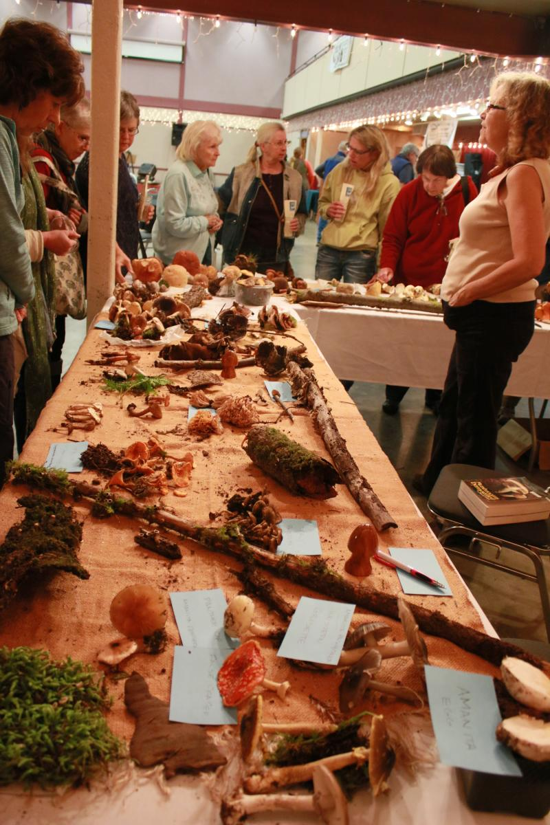 News from NACo - Fungi fest trims county park's repair bill