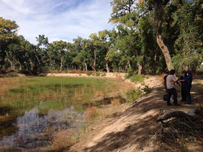 Wetlands @Valle de Oro