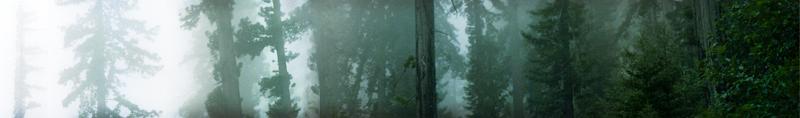 redwood banner