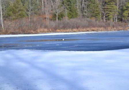 Orange Pond Ice