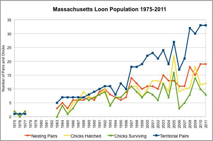 MA Loon Population