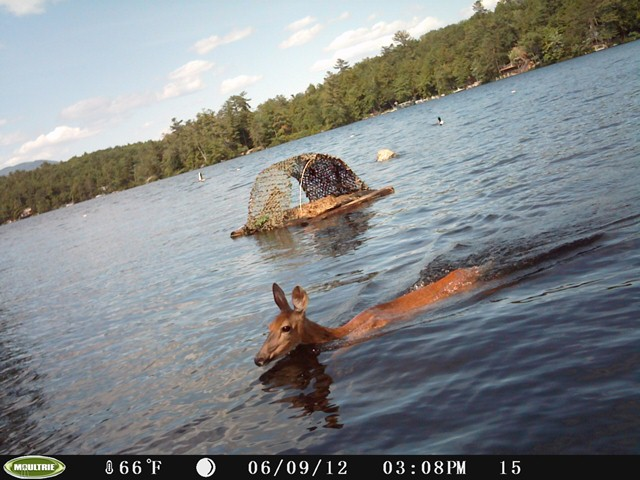 Nest camera & deer