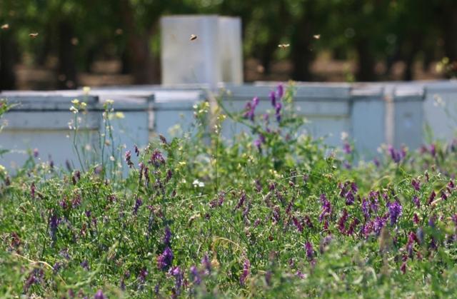 Hives & Lana Vetch PAm Field Day