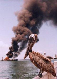 Pelican Oil 2
