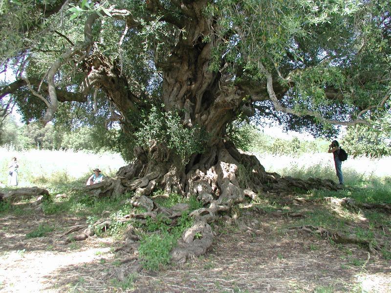 Mary's Tree