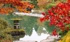 Japanese garden in fall