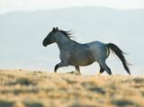 Riderless horse running along hilltop