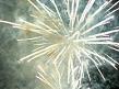 Burst of fireworks