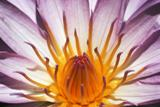 Dramatic close-up of a flower
