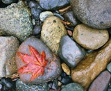 Red leaf on wet rocks