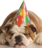 Snoozing bulldog with a party hat