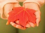 Hands holding a perfect red maple leaf