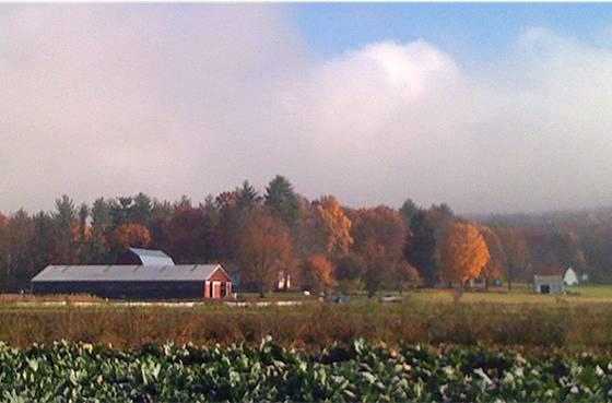 Picadilly Farm