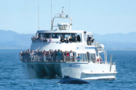 Island Packers Whale Watching boat