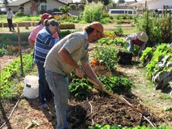 community roots garden